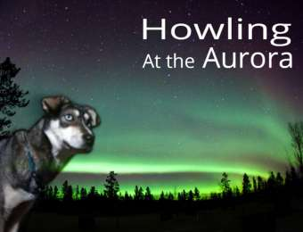 Howling under the Aurora